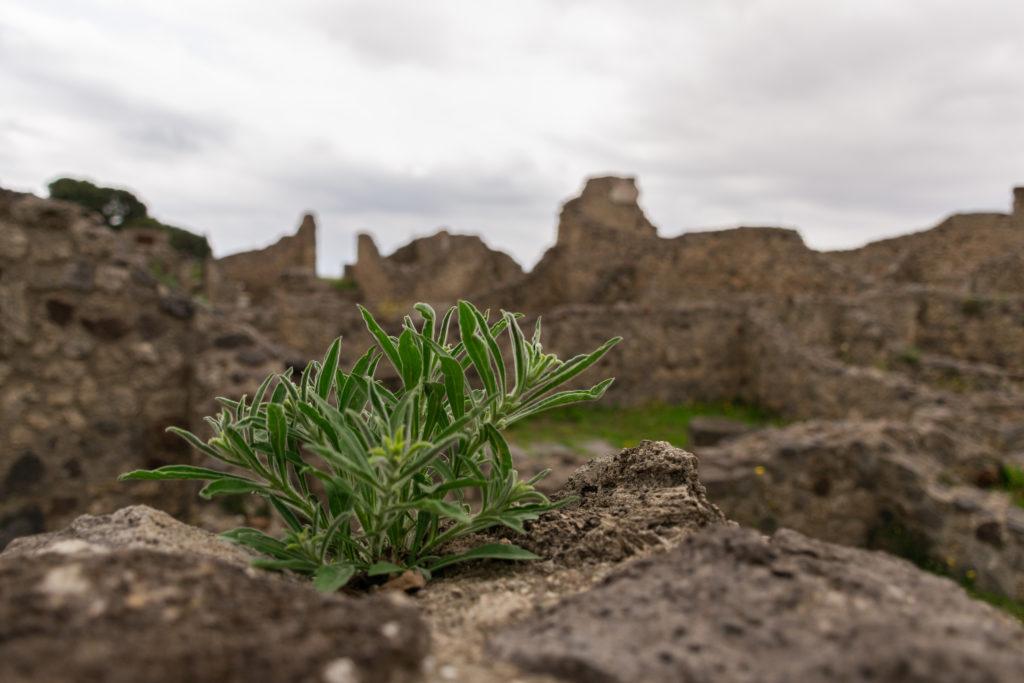 plante pompei ruines côte amalfitaine