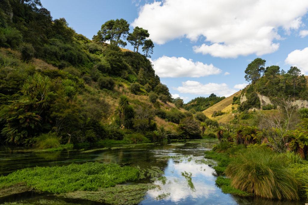 mogoonthego mogo on the go road trip nouvelle zélande ile du nord blue springs nature eau pure blog voyage travel