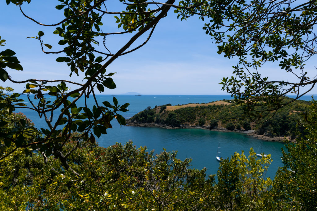 mogoonthego mogo on the go blog voyage auckland nouvelle zélande travel océanie waiheke ile ferry