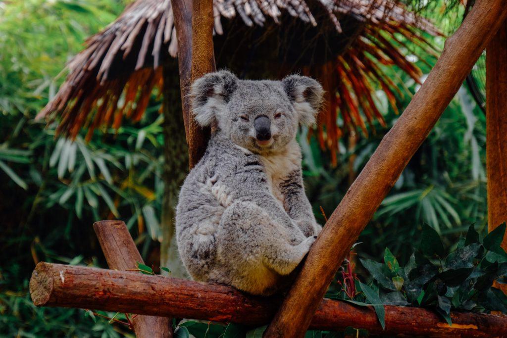 feux de forets en australie au secours de la faune sauvage documentaire arte tv