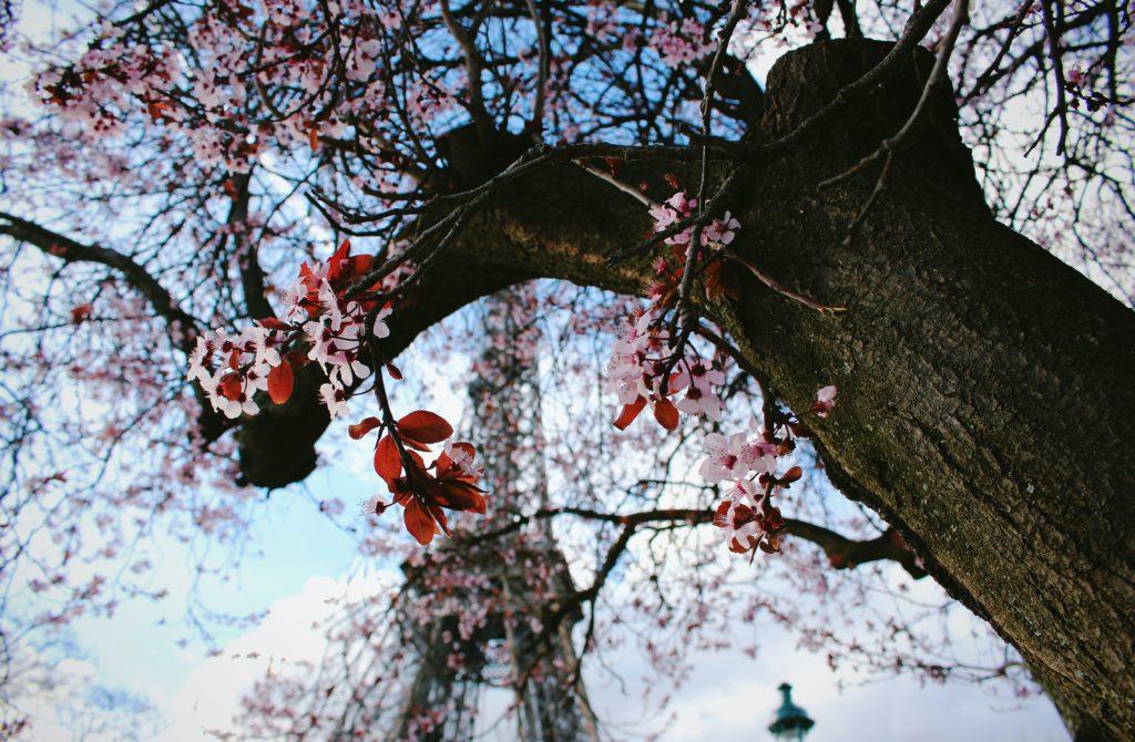 steven lasry 7EHSlkwRM3s unsplash 1024x670 - Que faire à Paris pour la Saint-Valentin ?