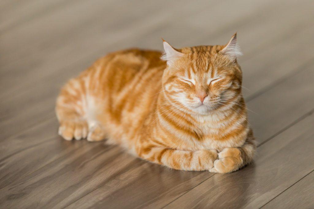 cat chat dormir avion news tourisme