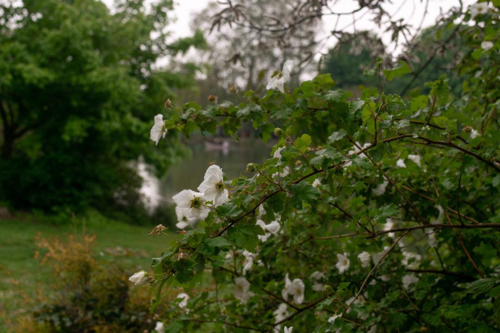 fleurs fleur nature foret bois